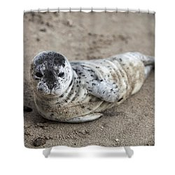 Seal Baby Shower Curtain by David Millenheft