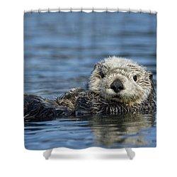 Sea Otter Alaska Shower Curtain by Michael Quinton