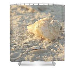 Sea Shells Shower Curtain by Kim Hojnacki