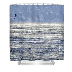 Sea Smoke And Gull Blues Shower Curtain by Marty Saccone