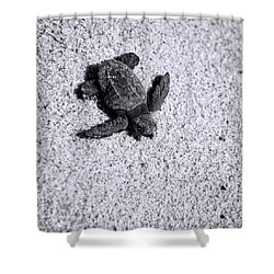 Sea Turtle In Black And White Shower Curtain by Sebastian Musial