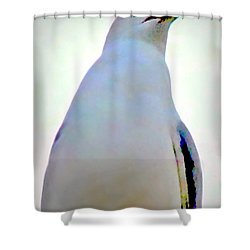 Seagull Close Up View Shower Curtain by Danielle  Parent