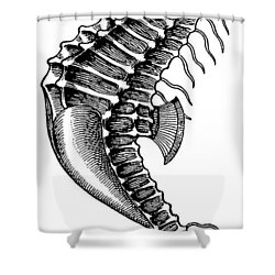 Seahorse Shower Curtain by Unknown