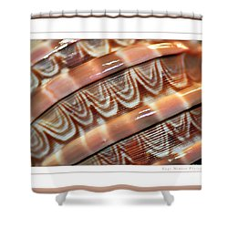 Seashell Abstract 2 Shower Curtain by Kaye Menner