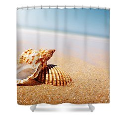 Seashell And Conch Shower Curtain by Carlos Caetano