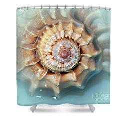 Seashell Wall Art 13 - Spiral Of Harpa Ventricosa Shower Curtain by Kaye Menner