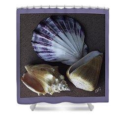 Seashells Spectacular No 30 Shower Curtain by Ben and Raisa Gertsberg