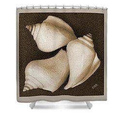 Seashells Spectacular No 4 Shower Curtain by Ben and Raisa Gertsberg