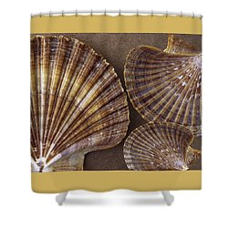 Seashells Spectacular No 7 Shower Curtain by Ben and Raisa Gertsberg