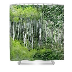 Seasons Of The Aspen Shower Curtain by Carol Cavalaris