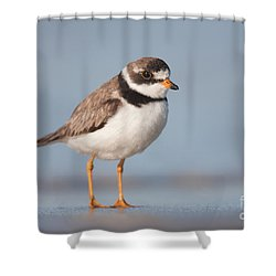 Semipalmated Plover Shower Curtain by Clarence Holmes