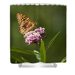 Serendipity Butterfly Shower Curtain by Christina Rollo