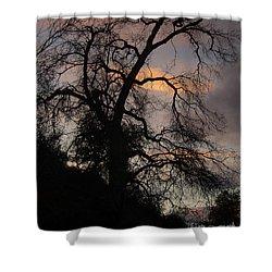 Shadowlands 5 Shower Curtain by Bedros Awak