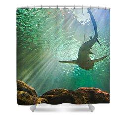 Shark Tank Shower Curtain by Bill Pevlor