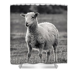 Sheep Art  Shower Curtain by Lucid Mood