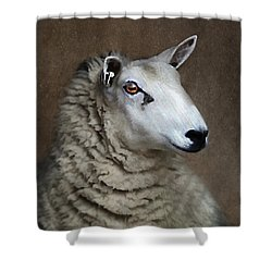 Sheep Shower Curtain by Darren Fisher