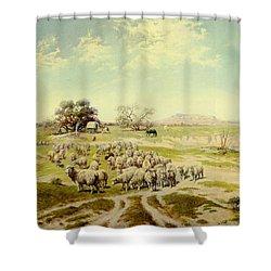 Sheepherding Montana Shower Curtain by Olaf Seltzer