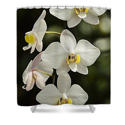 Shinning Orchids Shower Curtain by Penny Lisowski