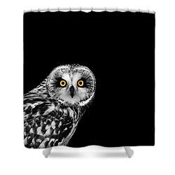 Short-eared Owl Shower Curtain by Mark Rogan