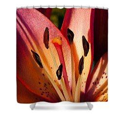 Shy Pink Lily Shower Curtain by Omaste Witkowski