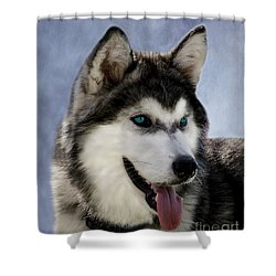 Siberian Husky Shower Curtain by Linsey Williams