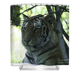 Siberian Tiger Profile Shower Curtain by John Telfer