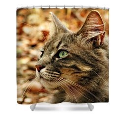 Silver Grey Tabby Cat Shower Curtain by Michelle Wrighton