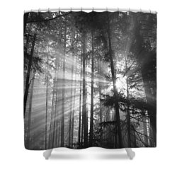 Silver Light Shower Curtain by Diane Schuster