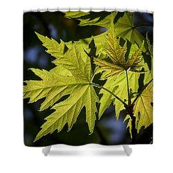 Silver Maple Shower Curtain by Ernie Echols
