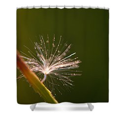 Simpliest Beauty Shower Curtain by Aimelle