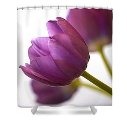 Simply Purple Shower Curtain by Deb Halloran