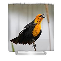 Sing A Song Shower Curtain by Athena Mckinzie