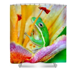 Sit A Spell Shower Curtain by Charlotte Schafer