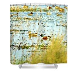 Sitting Ducks Shower Curtain by Scott Pellegrin