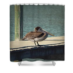 Sitting On The Dock Of The Bay Shower Curtain by Kim Hojnacki