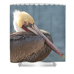 Sitting Pretty Pelican Shower Curtain by Bob and Jan Shriner