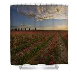 Skagit Tulip Fields Sunset Shower Curtain by Mike Reid