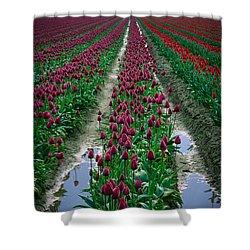 Skagit Valley Tulips Shower Curtain by Inge Johnsson
