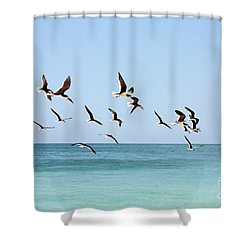 Skimmers And Swimmers Shower Curtain by Carol Groenen