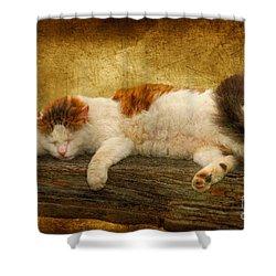 Sleepy Kitty Shower Curtain by Lois Bryan