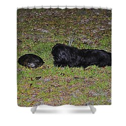 Slider And Shih-tzu Shower Curtain by Al Powell Photography USA