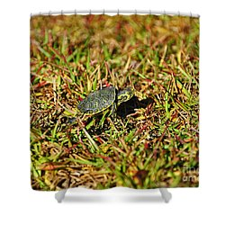 Slider To Go Shower Curtain by Al Powell Photography USA