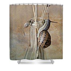 Snails Shower Curtain by Nailia Schwarz