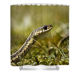 Snake Encounter Close-up Shower Curtain by Christina Rollo