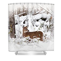 Snow Doe Shower Curtain by Karol Livote
