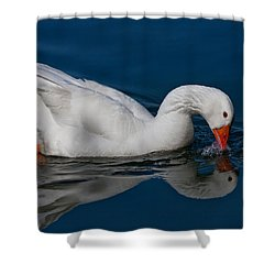 Snow Goose Reflected Shower Curtain by John Haldane