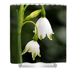 Snowbells In Spring Shower Curtain by Rona Black