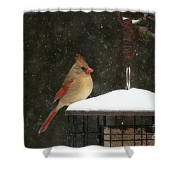 Snowy Cardinal Shower Curtain by Benanne Stiens