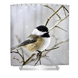 Snowy Chickadee Bird Shower Curtain by Christina Rollo
