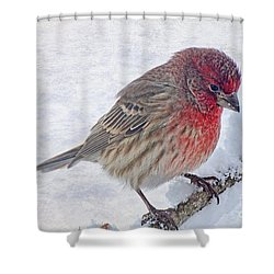 Snowy Day Housefinch Shower Curtain by Debbie Portwood